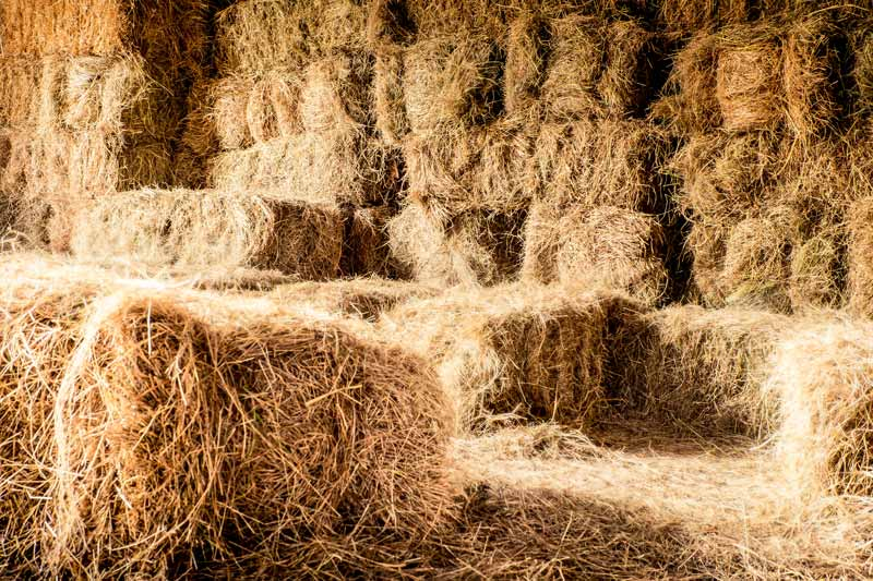 Being easier to find than a needle in a haystack will sure help get you new coaching clients.
