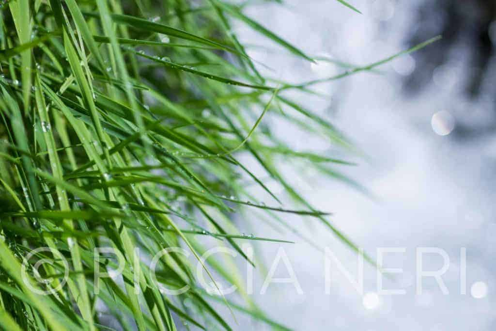 Get this free image of grass by a waterfall with drops of water on the blades.
