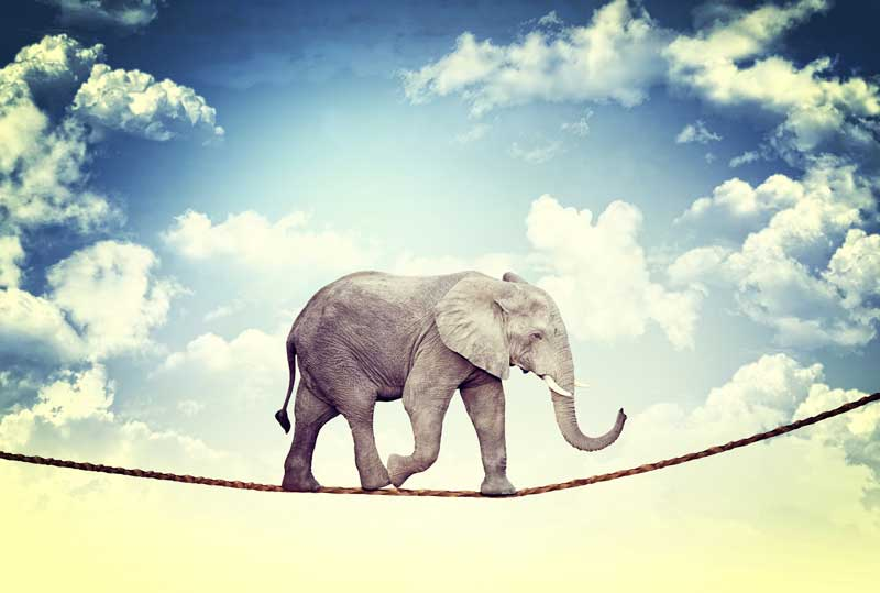 An elephant walking on a slackline: nothing is impossible in Wordpress.