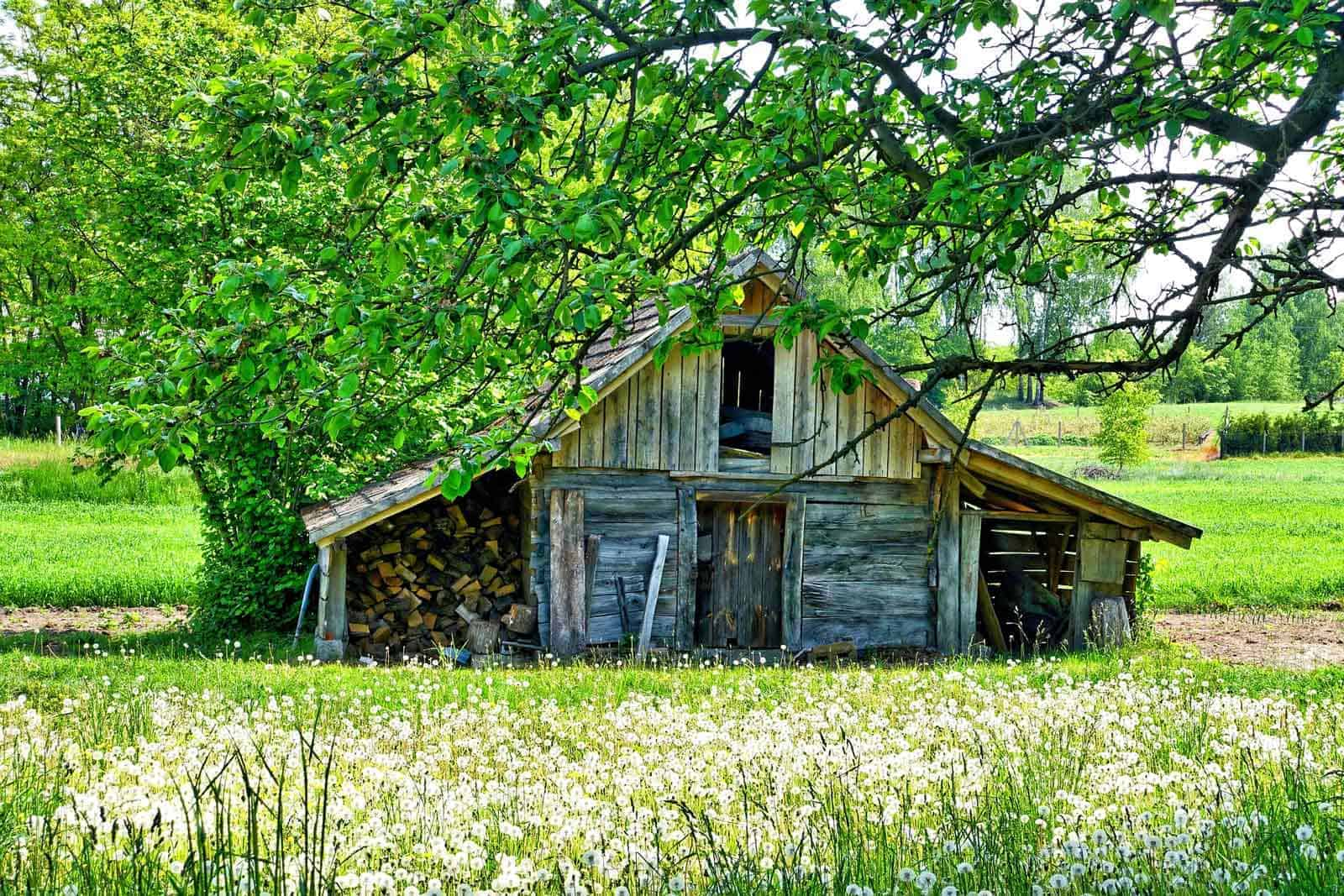 A wooden shed in a nature setting in spring.