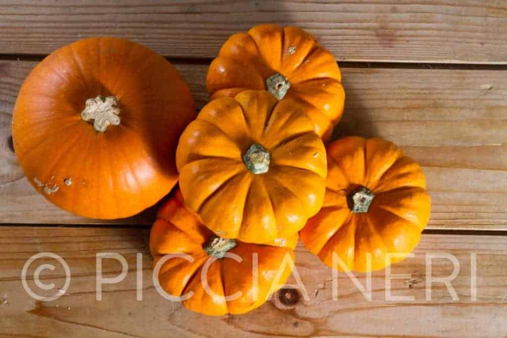 Free image of Halloween pumpkins